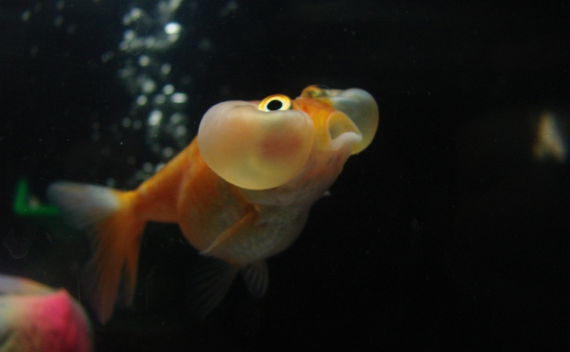The Death of a Goldfish (or, how to let go of that novel you've just written)